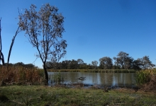 Credit: Gwydir Wetlands by B. Moggridge 2014. Copyright State of New South Wales through the Department of Trade and Investment, Regional Infrastructure and Services, 2016